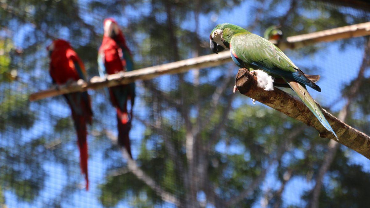 Parque Zoobotânico Vale estará em recesso nos dias 24 e 25