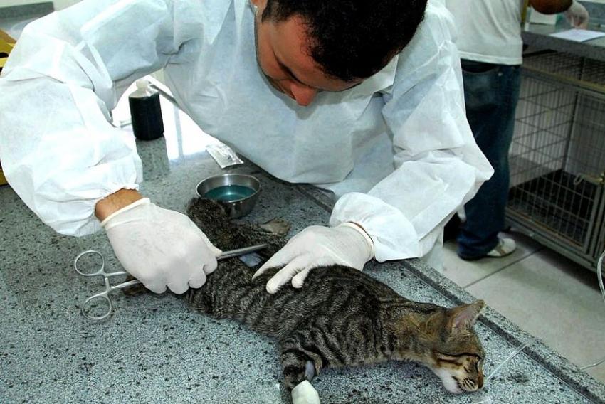Canaã vai inaugurar Unidade de Vigilância de Zoonoses para cães e gatos