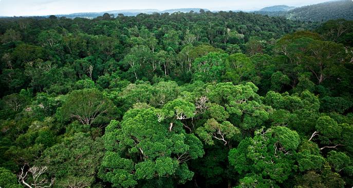 ICMBio realiza Reunião do Conselho consultivo da floresta nacional de Carajás para discutir criação de parque nacional