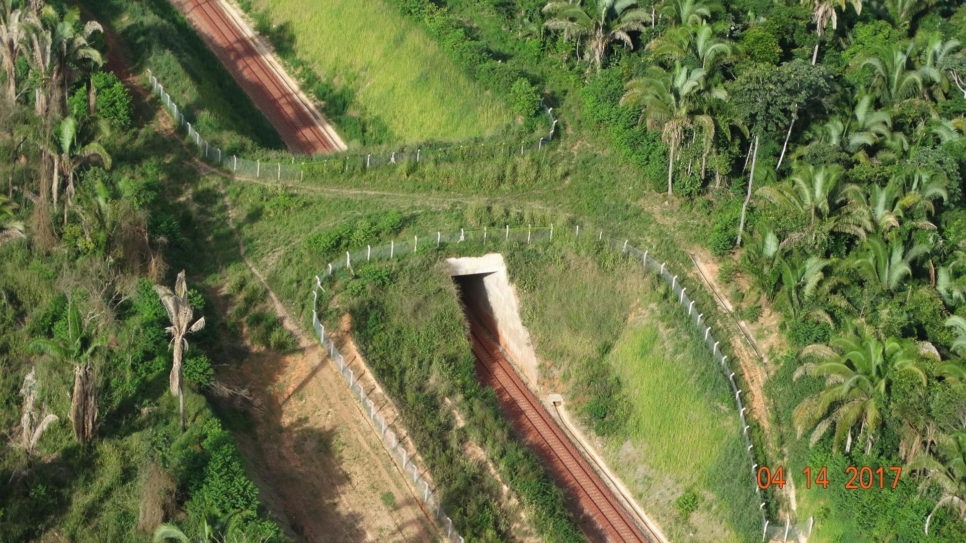 Passagens exclusivas para animais do Ramal Ferroviário S11D beneficiam fauna na Floresta Amazônica
