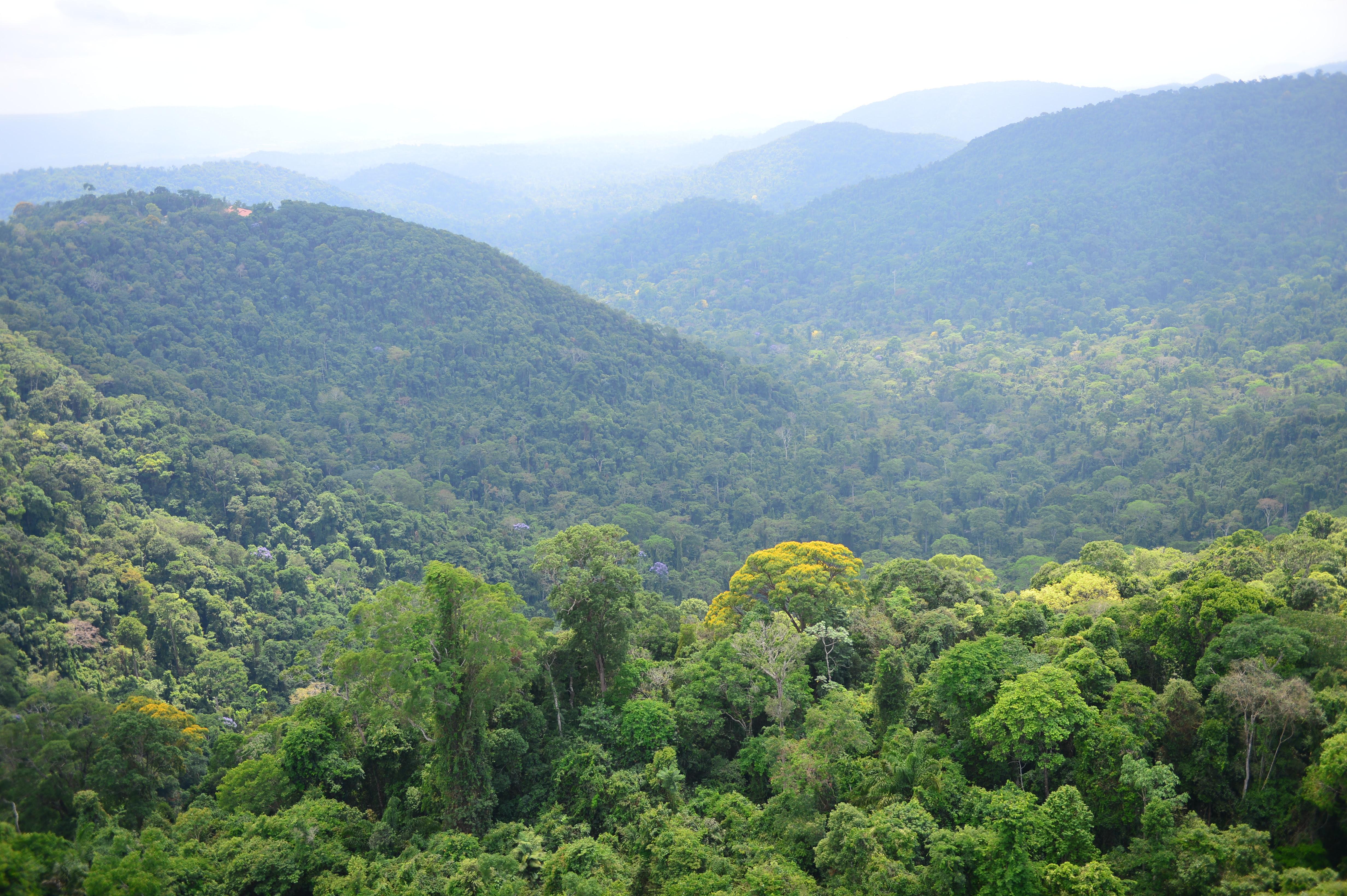 Mineradora Vale adere à campanha da ONU para o dia Mundial do Meio Ambiente