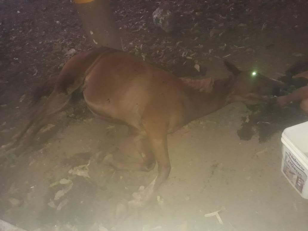 APAMA se manifesta sobre o caso de égua abandonada após a Cavalgada da FAP 2018