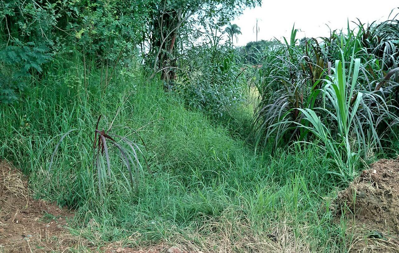 Jovens são brutalmente assassinados em matagal próximo a W Torres