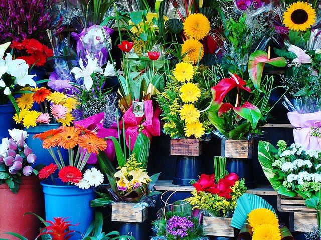 Defunto pula cerca para roubar flores e é flagrado por dono de floricultura em Marabá