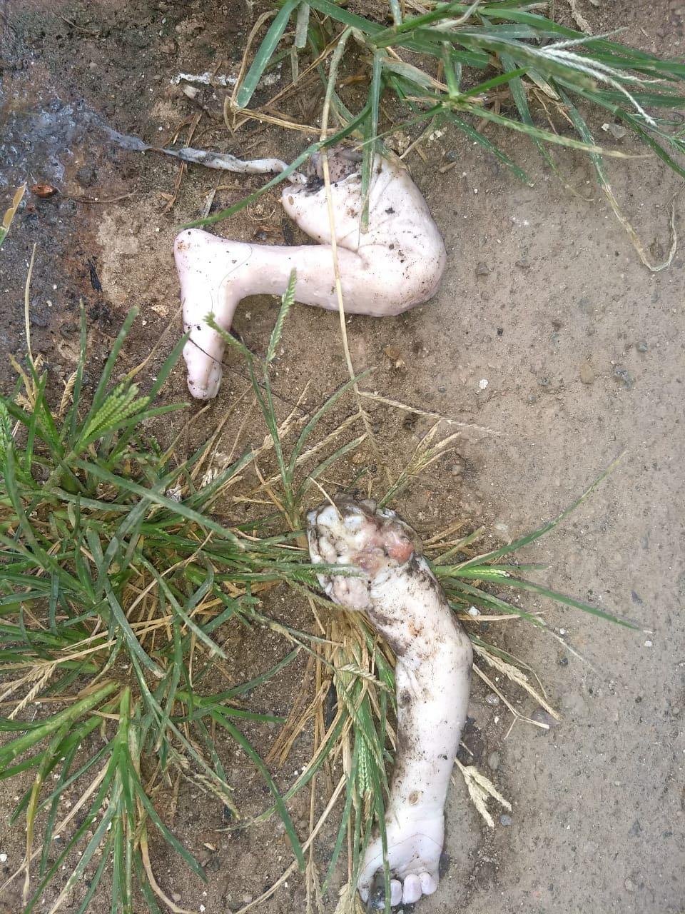 Braços e pernas de bebê são encontrados no meio da rua em Parauapebas
