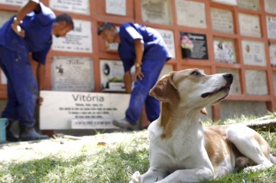 Projeto que regulamenta funcionamento de cemitérios de animais é aprovado em Belém