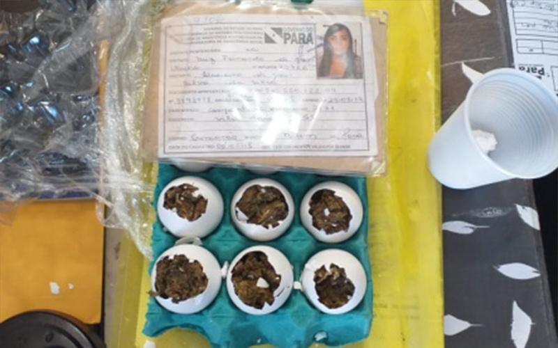 Mulher tenta entrar com 'ovos de maconha' em prisão da Grande Belém