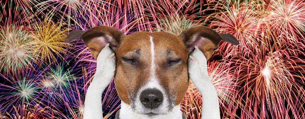 Copa do Mundo: como proteger o cachorro dos fogos de artifício?