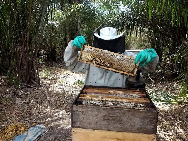 Prefeitura doa 300 kg de cera para impulsionar produção de apicultores