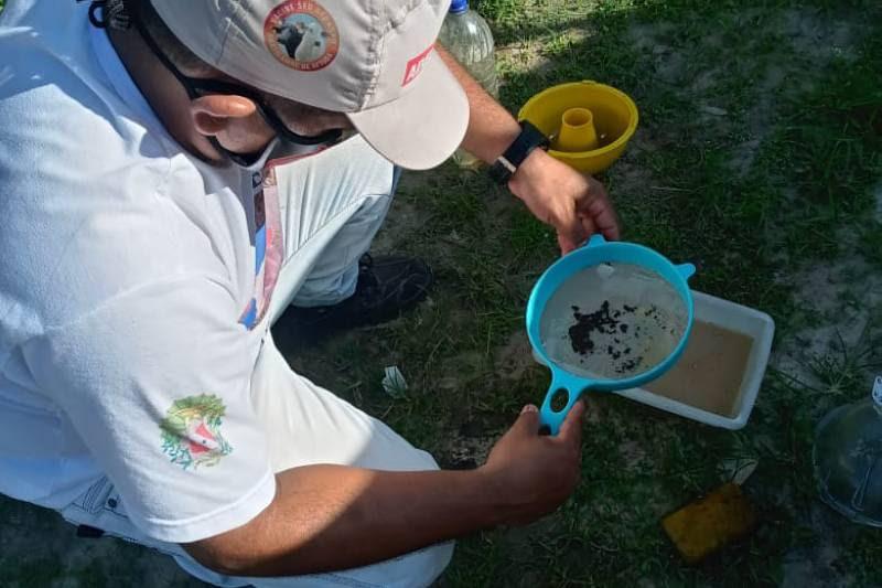Pará avança rumo à erradicação da mosca-da-carambola